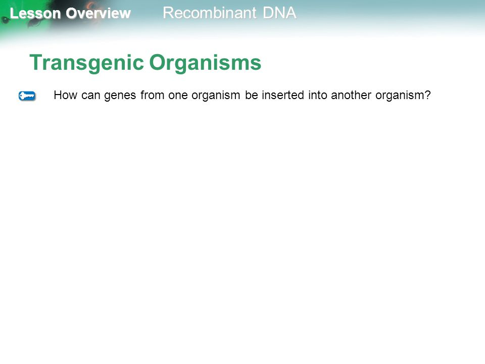 Lesson Overview Lesson Overview Recombinant DNA Transgenic Organisms How can genes from one organism be inserted into another organism?