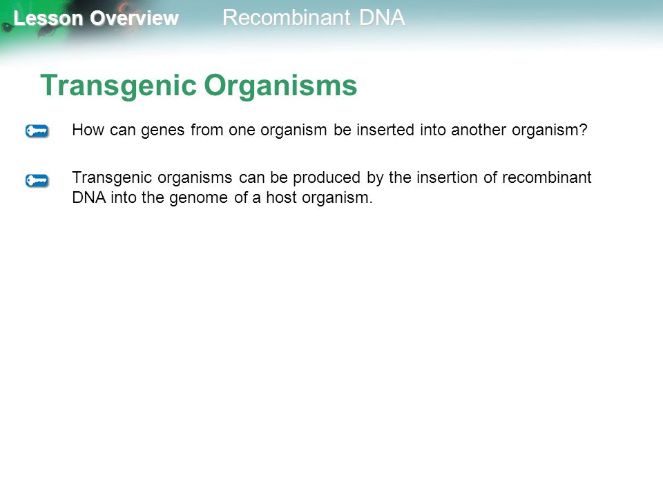 Lesson Overview Lesson Overview Recombinant DNA Transgenic Organisms How can genes from one organism be inserted into another organism? Transgenic org