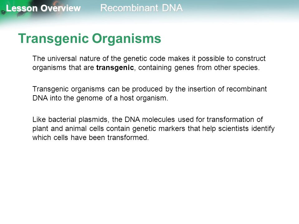 Lesson Overview Lesson Overview Recombinant DNA Transgenic Organisms The universal nature of the genetic code makes it possible to construct organisms