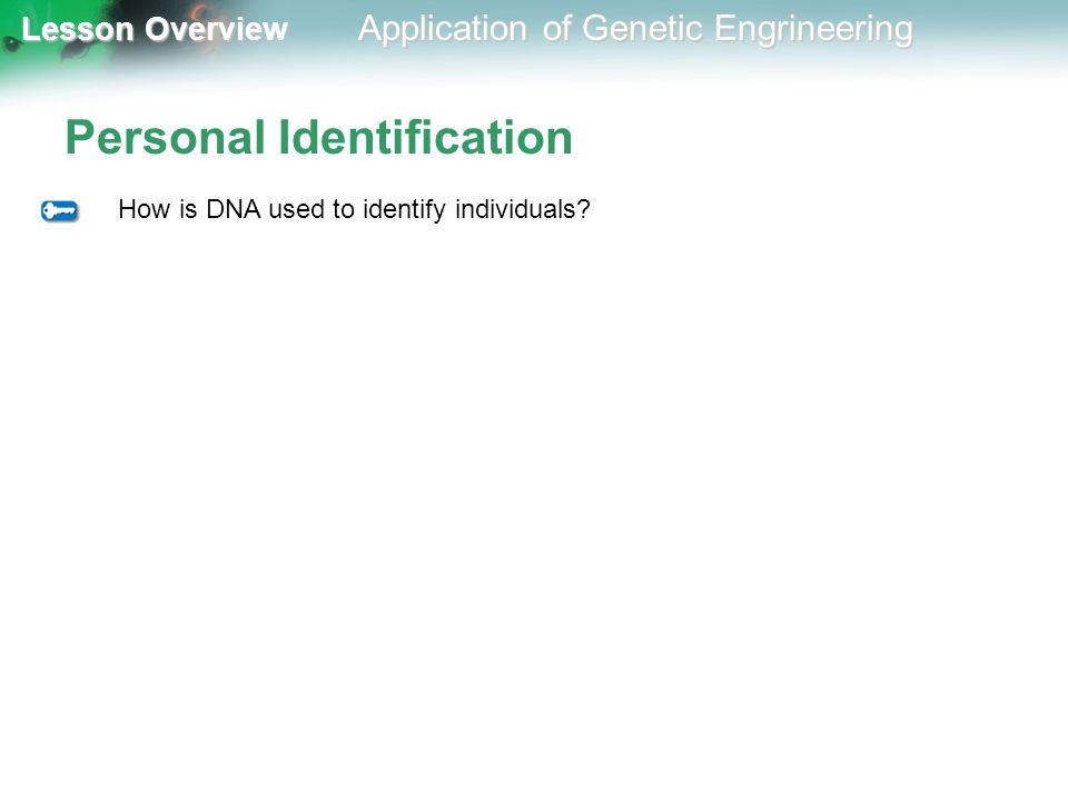 Lesson Overview Lesson Overview Application of Genetic Engrineering Personal Identification How is DNA used to identify individuals?