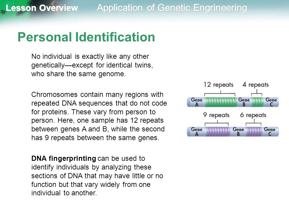 Lesson Overview Lesson Overview Application of Genetic Engrineering Personal Identification No individual is exactly like any other genetically—except