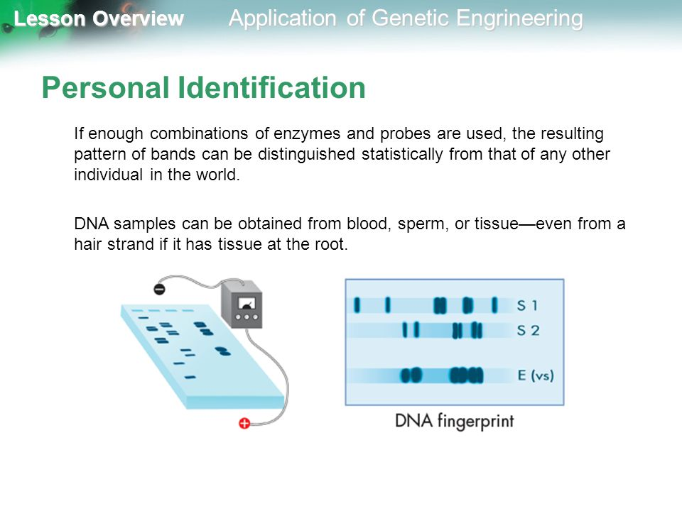 Lesson Overview Lesson Overview Application of Genetic Engrineering Personal Identification If enough combinations of enzymes and probes are used, the