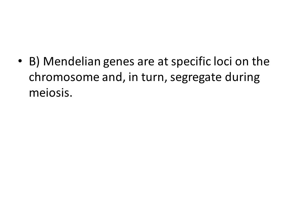 B) Mendelian genes are at specific loci on the chromosome and, in turn, segregate during meiosis.
