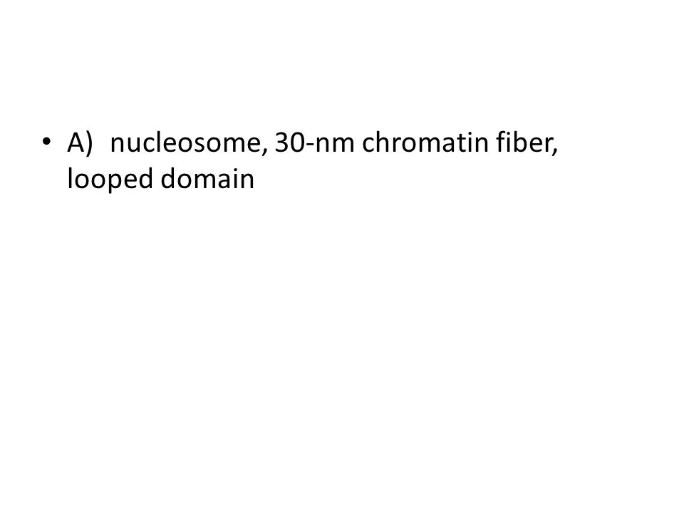 A)nucleosome, 30-nm chromatin fiber, looped domain