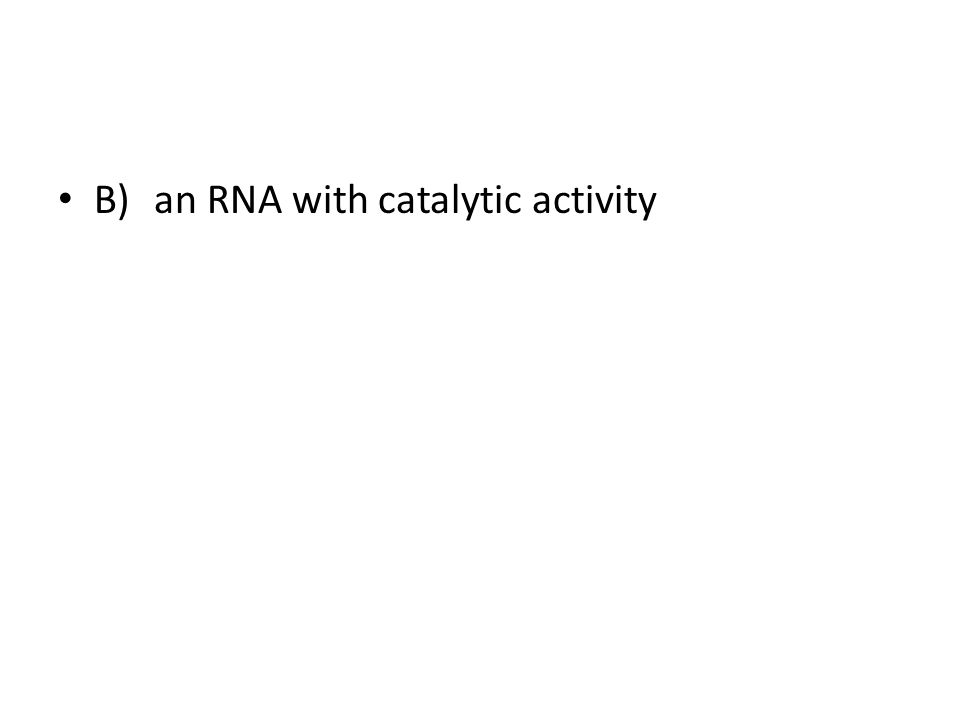 B)an RNA with catalytic activity
