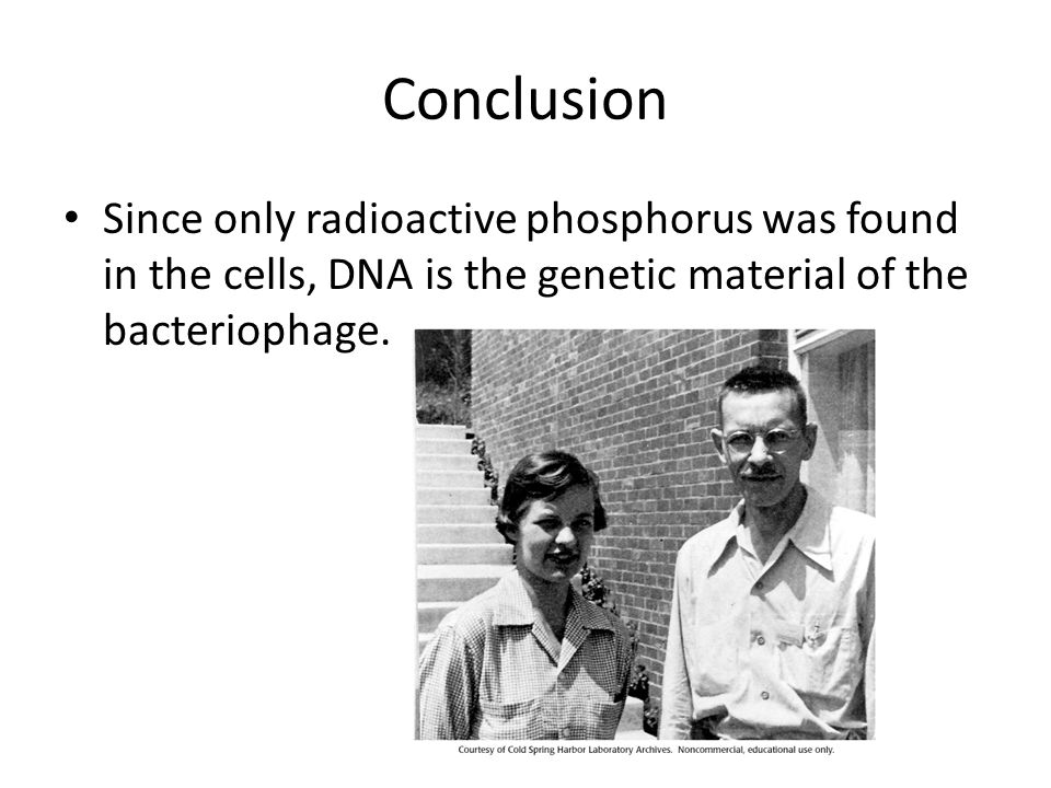 Conclusion Since only radioactive phosphorus was found in the cells, DNA is the genetic material of the bacteriophage.