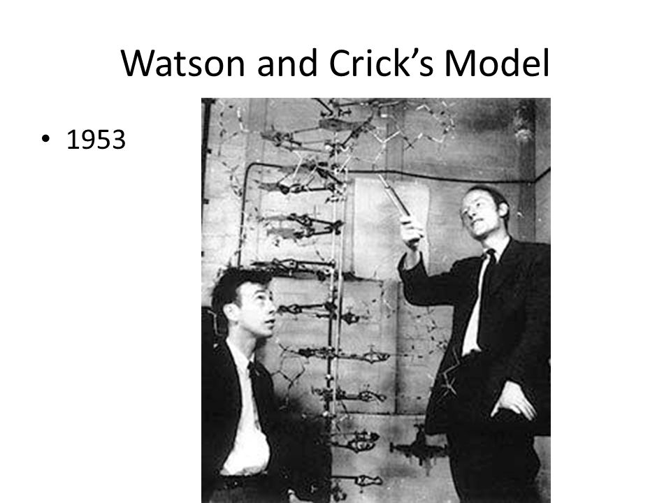 Watson and Crick's Model 1953