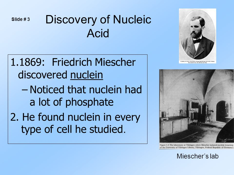 Discovery of Nucleic Acid 1.1869: Friedrich Miescher discovered nuclein –Noticed that nuclein had a lot of phosphate 2.