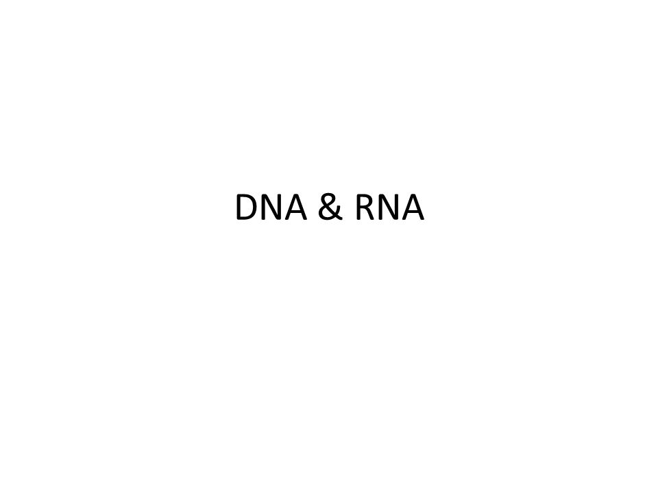 Four kinds of nitrogenous bases PURINES Guanine Adenine Two ring structure PYRIMIDINES Cytosine Thymine One ring structure