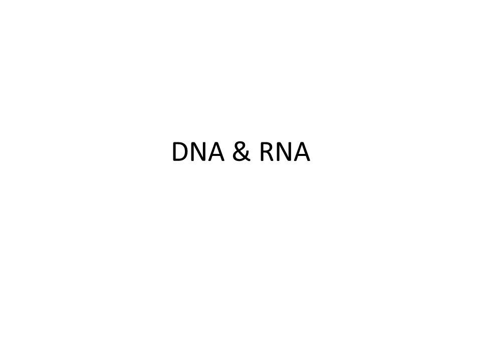 TRANSCRIPTION DNA language RNA language New mRNA need to be edited before Translation.