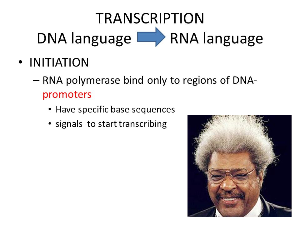 TRANSCRIPTION DNA language RNA language INITIATION – RNA polymerase bind only to regions of DNA- promoters Have specific base sequences signals to start transcribing