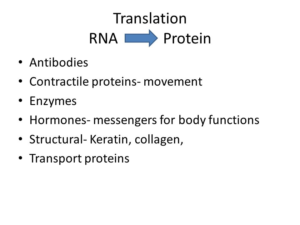 Translation RNA Protein Antibodies Contractile proteins- movement Enzymes Hormones- messengers for body functions Structural- Keratin, collagen, Transport proteins