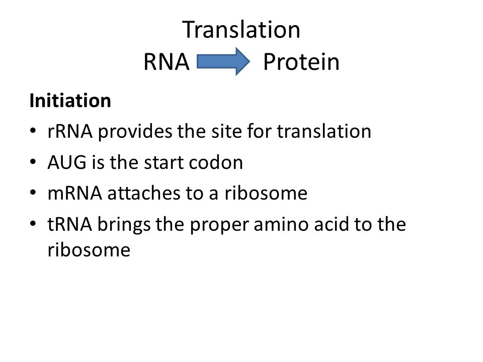 Translation RNA Protein Initiation rRNA provides the site for translation AUG is the start codon mRNA attaches to a ribosome tRNA brings the proper amino acid to the ribosome