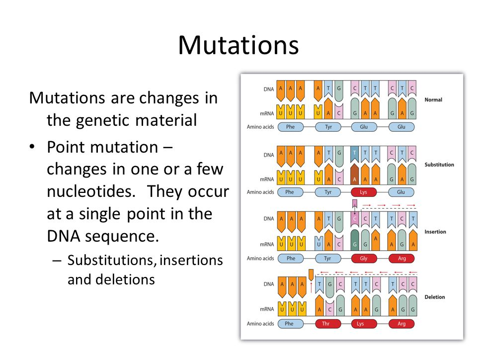 Mutations Mutations are changes in the genetic material Point mutation – changes in one or a few nucleotides.