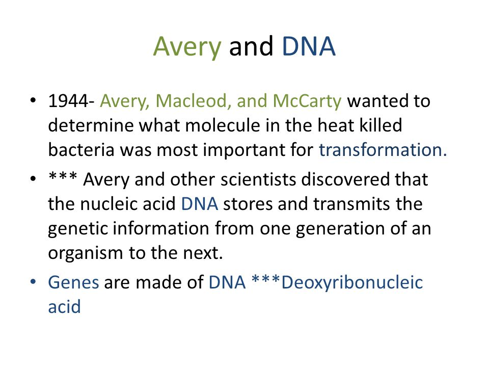 Avery and DNA 1944- Avery, Macleod, and McCarty wanted to determine what molecule in the heat killed bacteria was most important for transformation.