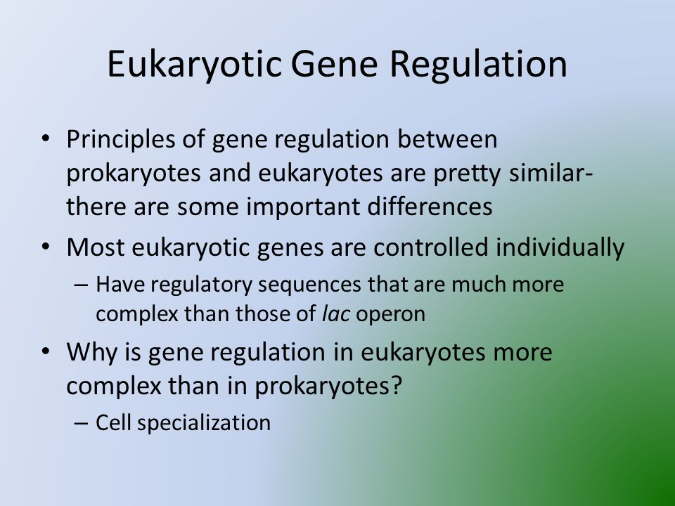 Eukaryotic Gene Regulation Principles of gene regulation between prokaryotes and eukaryotes are pretty similar- there are some important differences Most eukaryotic genes are controlled individually – Have regulatory sequences that are much more complex than those of lac operon Why is gene regulation in eukaryotes more complex than in prokaryotes.