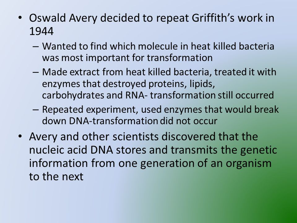 Oswald Avery decided to repeat Griffith's work in 1944 – Wanted to find which molecule in heat killed bacteria was most important for transformation – Made extract from heat killed bacteria, treated it with enzymes that destroyed proteins, lipids, carbohydrates and RNA- transformation still occurred – Repeated experiment, used enzymes that would break down DNA-transformation did not occur Avery and other scientists discovered that the nucleic acid DNA stores and transmits the genetic information from one generation of an organism to the next