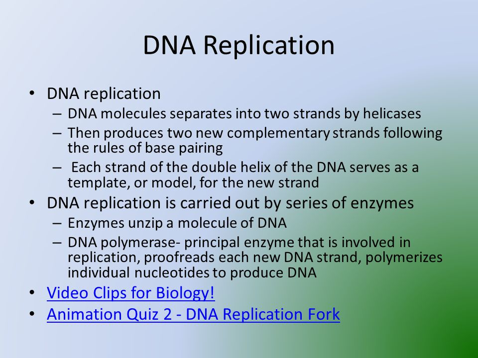 DNA Replication DNA replication – DNA molecules separates into two strands by helicases – Then produces two new complementary strands following the rules of base pairing – Each strand of the double helix of the DNA serves as a template, or model, for the new strand DNA replication is carried out by series of enzymes – Enzymes unzip a molecule of DNA – DNA polymerase- principal enzyme that is involved in replication, proofreads each new DNA strand, polymerizes individual nucleotides to produce DNA Video Clips for Biology.