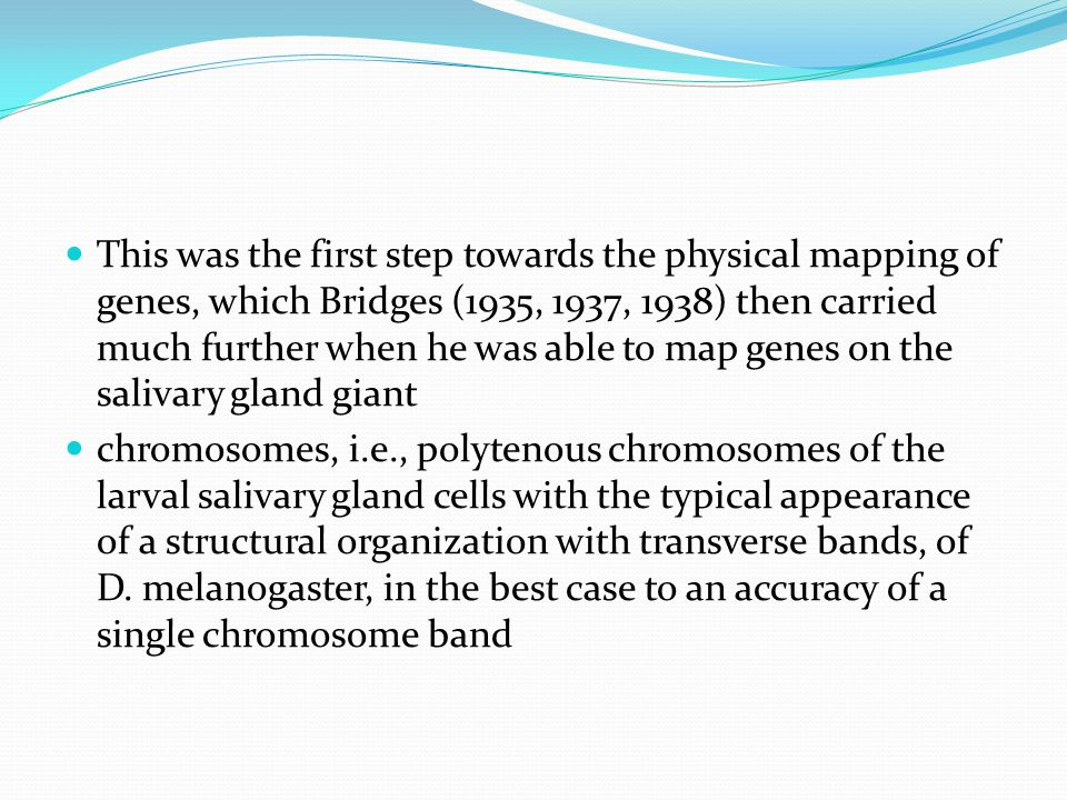 This was the first step towards the physical mapping of genes, which Bridges (1935, 1937, 1938) then carried much further when he was able to map genes on the salivary gland giant chromosomes, i.e., polytenous chromosomes of the larval salivary gland cells with the typical appearance of a structural organization with transverse bands, of D.