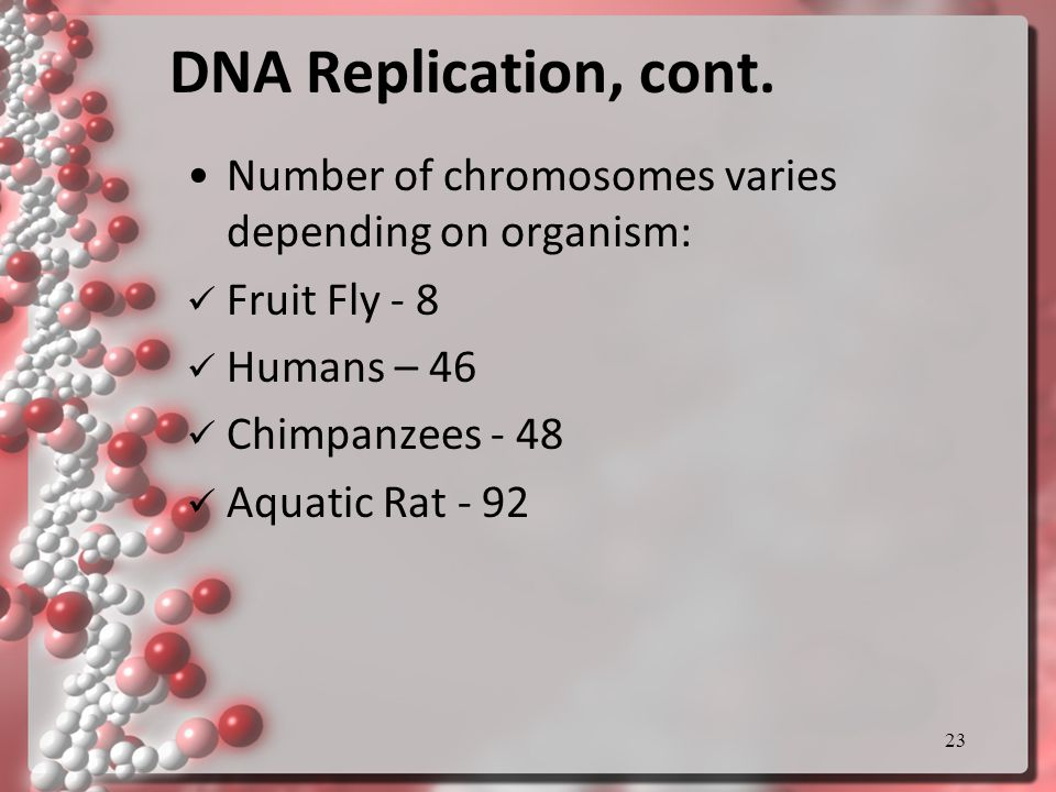 DNA Replication, cont.