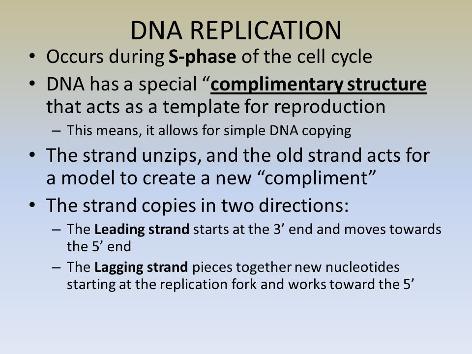DNA REPLICATION Occurs during S-phase of the cell cycle DNA has a special complimentary structure that acts as a template for reproduction – This means, it allows for simple DNA copying The strand unzips, and the old strand acts for a model to create a new compliment The strand copies in two directions: – The Leading strand starts at the 3' end and moves towards the 5' end – The Lagging strand pieces together new nucleotides starting at the replication fork and works toward the 5'