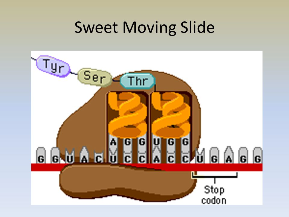 Sweet Moving Slide
