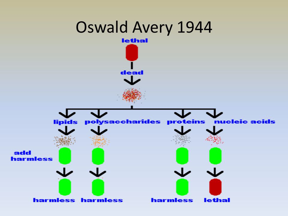 Oswald Avery 1944