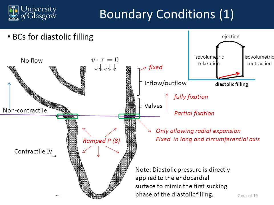 Boundary Conditions (2) Contractile LV Non-contractile Valves Inflow/outflow Only allowing radial expansion Fixed in long and circumferential axis fixed 8 out of 19 BCs for isovolumetric contraction No flow diastolic filling isovolumetric relaxation isovolumetric contraction ejection No flow fully fixation Partial fixation