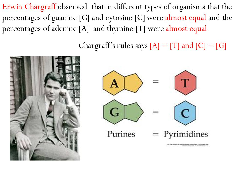 Erwin Chargraff observed that in different types of organisms that the percentages of guanine [G] and cytosine [C] were almost equal and the percentag