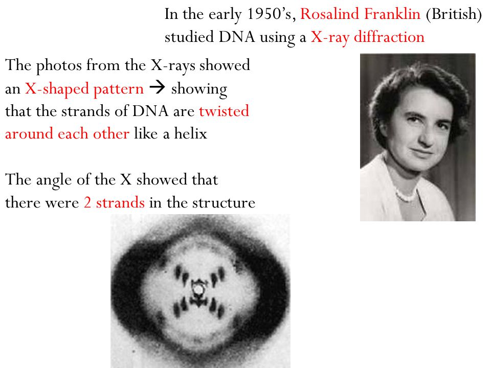 The photos from the X-rays showed an X-shaped pattern  showing that the strands of DNA are twisted around each other like a helix The angle of the X