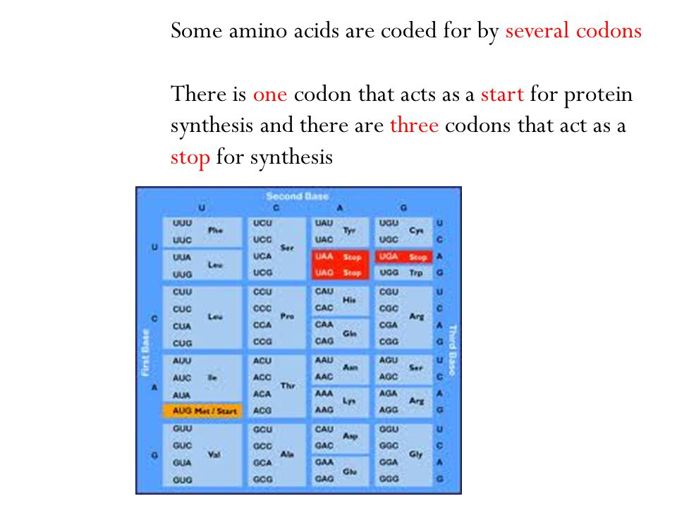 Some amino acids are coded for by several codons There is one codon that acts as a start for protein synthesis and there are three codons that act as
