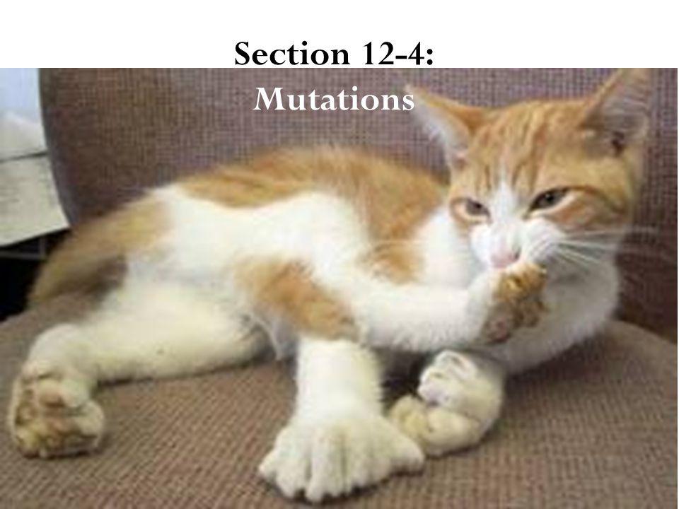 Section 12-4: Mutations