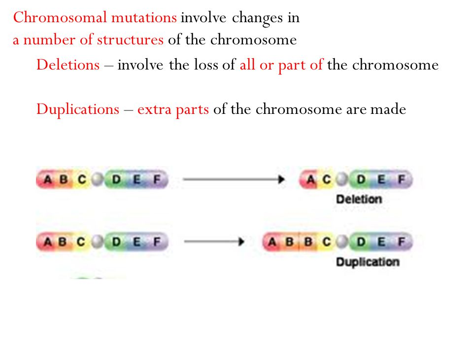 Deletions – involve the loss of all or part of the chromosome Duplications – extra parts of the chromosome are made Chromosomal mutations involve chan