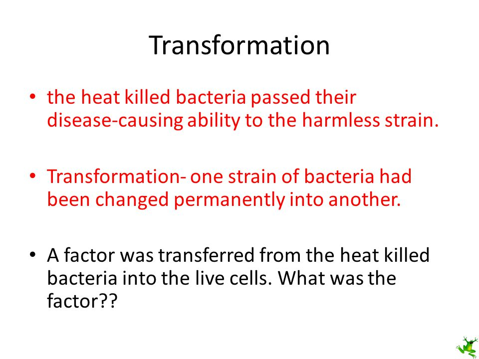 Avery and DNA Avery experimented to find out which factor in the heat killed bacteria was most important for transformation.