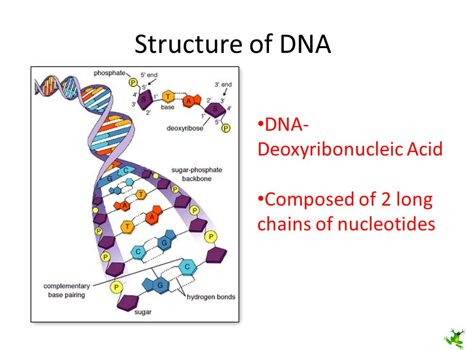 Interesting Facts Human DNA contains 3.2 billion base units – About 5 cm unwound There is ~1.5 billion miles of DNA in your body – 3,000 round trips to the moon or 600 round trips to the sun If each nucleotide would represent a letter on a text book page, you could stack the pages 65 feet high