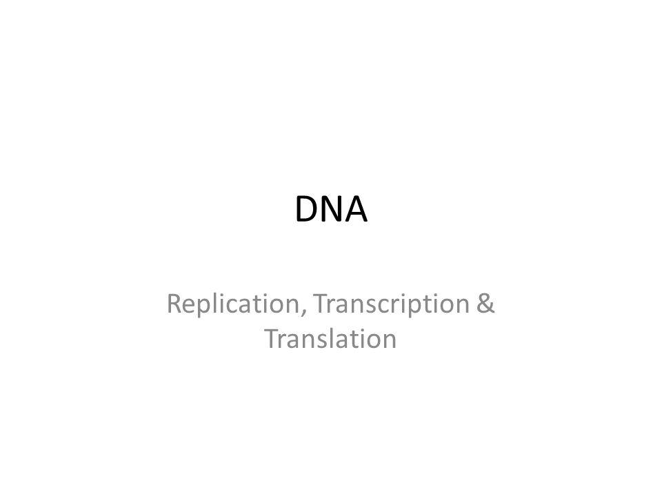 DNA Replication, Transcription & Translation