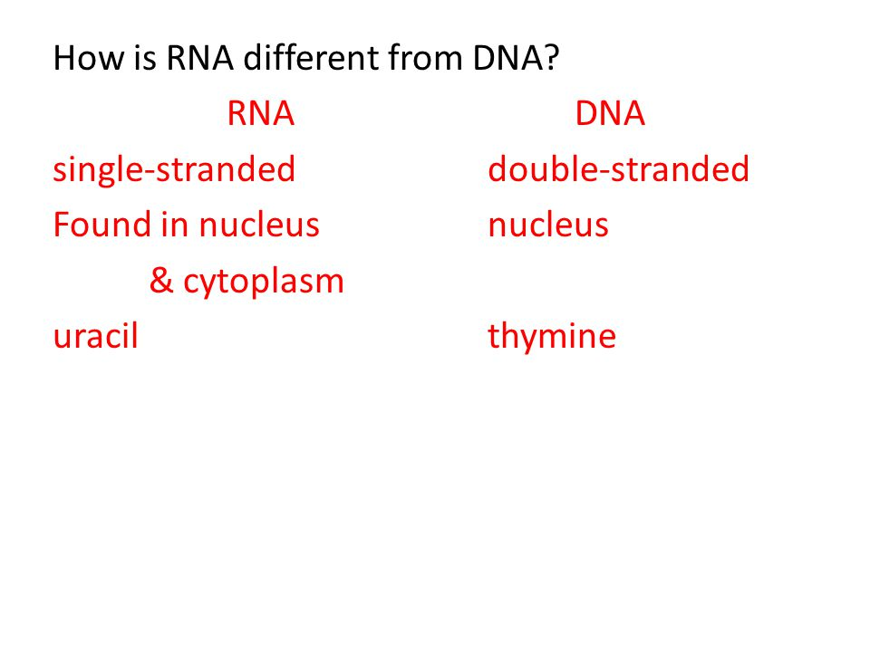 How is RNA different from DNA? RNADNA single-strandeddouble-stranded Found in nucleus nucleus & cytoplasm uracilthymine