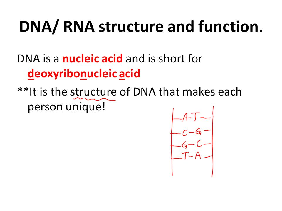 DNA/ RNA structure and function.