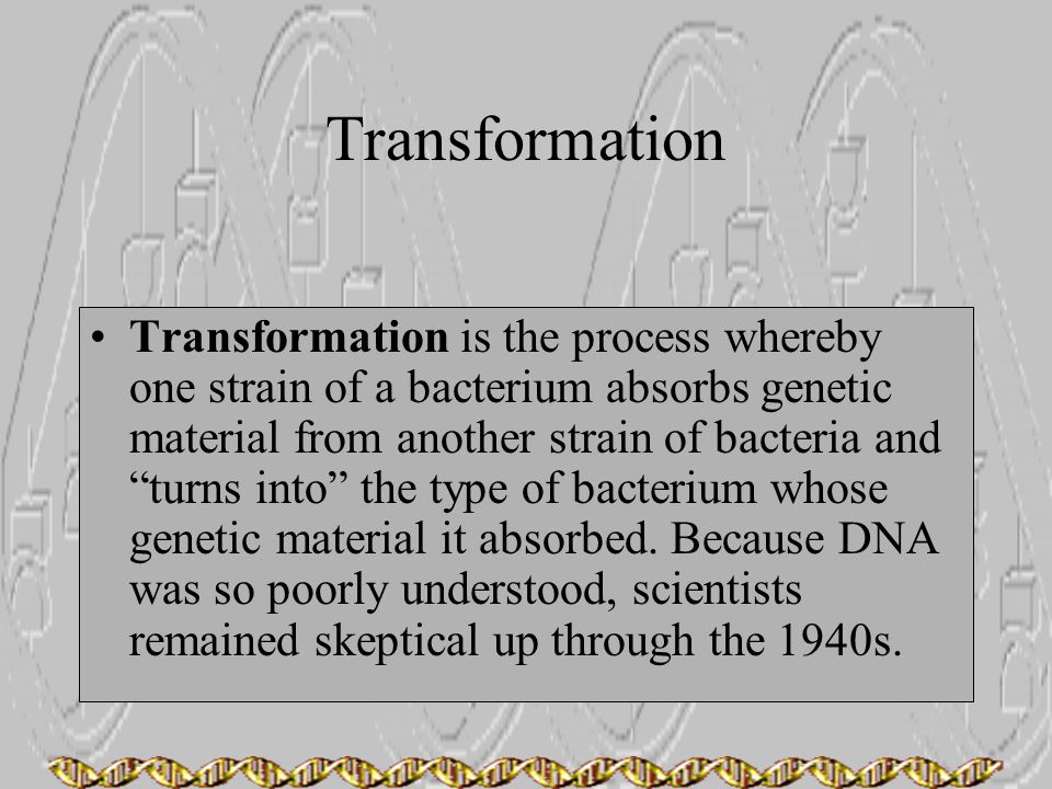 """Transformation Transformation is the process whereby one strain of a bacterium absorbs genetic material from another strain of bacteria and """"turns int"""