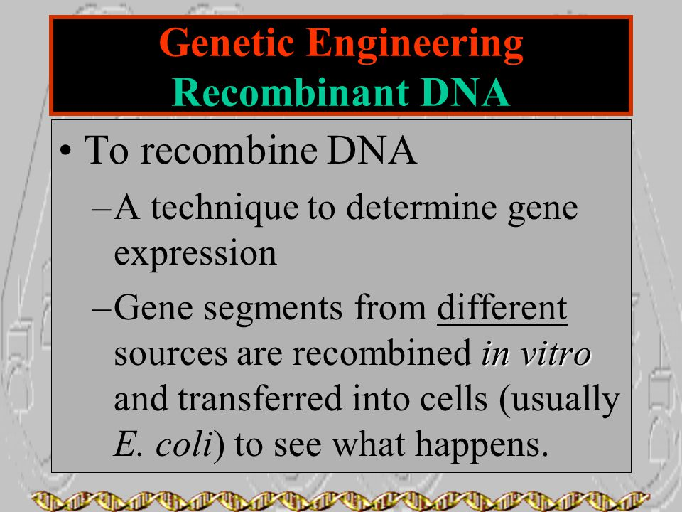 Genetic Engineering Recombinant DNA To recombine DNA –A technique to determine gene expression in vitro –Gene segments from different sources are reco