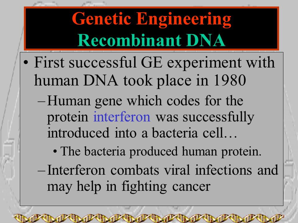 First successful GE experiment with human DNA took place in 1980 –Human gene which codes for the protein interferon was successfully introduced into a