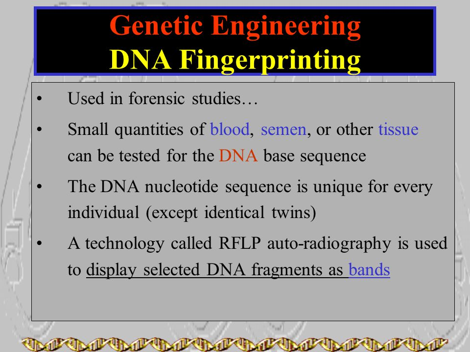 Used in forensic studies… Small quantities of blood, semen, or other tissue can be tested for the DNA base sequence The DNA nucleotide sequence is uni