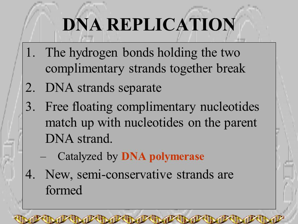 DNA REPLICATION 1.The hydrogen bonds holding the two complimentary strands together break 2.DNA strands separate 3.Free floating complimentary nucleot