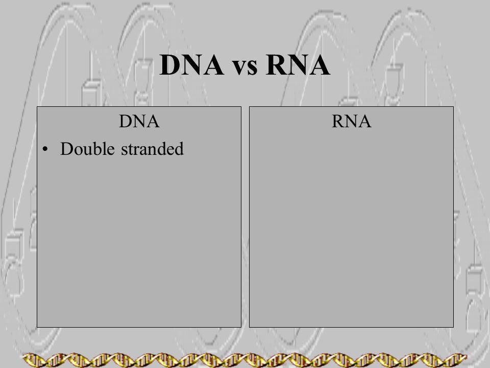 DNA vs RNA DNA Double stranded RNA