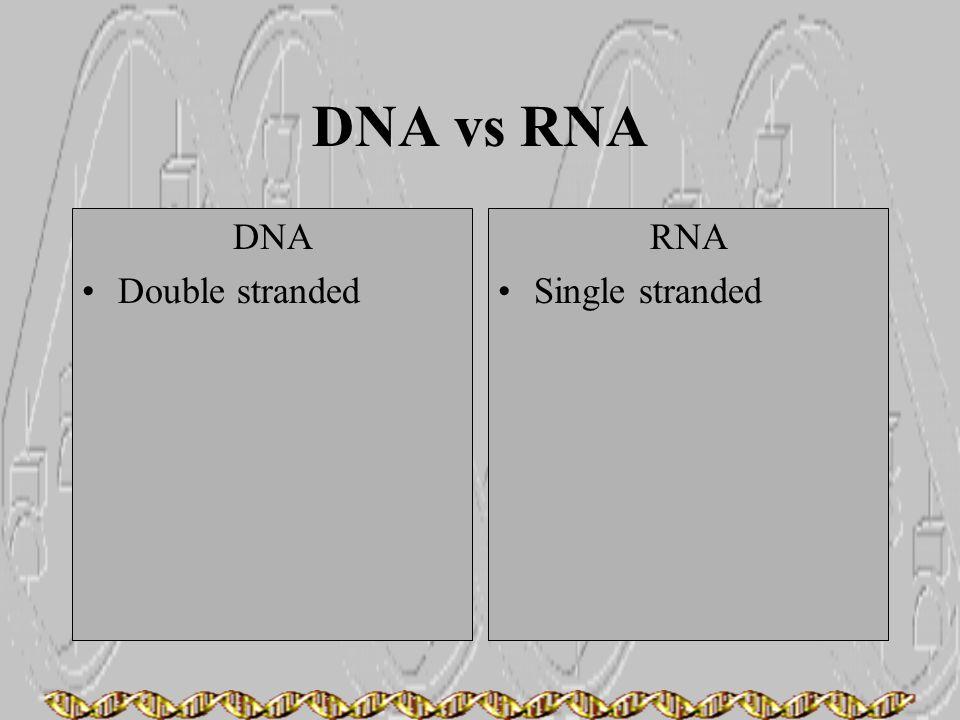 DNA vs RNA DNA Double stranded RNA Single stranded