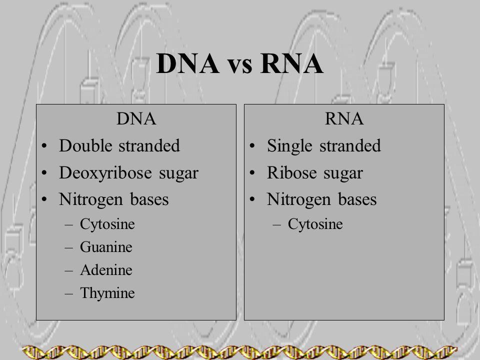 DNA vs RNA DNA Double stranded Deoxyribose sugar Nitrogen bases –Cytosine –Guanine –Adenine –Thymine RNA Single stranded Ribose sugar Nitrogen bases –