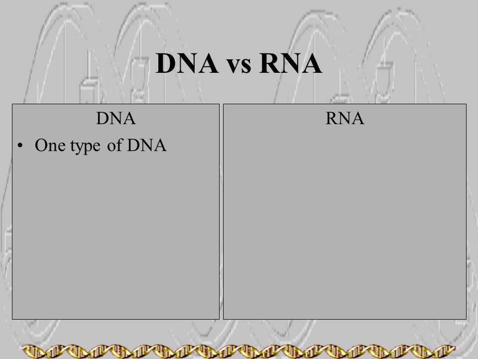 DNA vs RNA DNA One type of DNA RNA