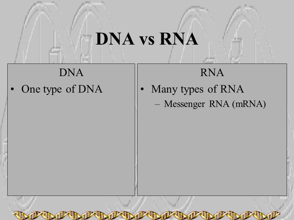 DNA vs RNA DNA One type of DNA RNA Many types of RNA –Messenger RNA (mRNA)