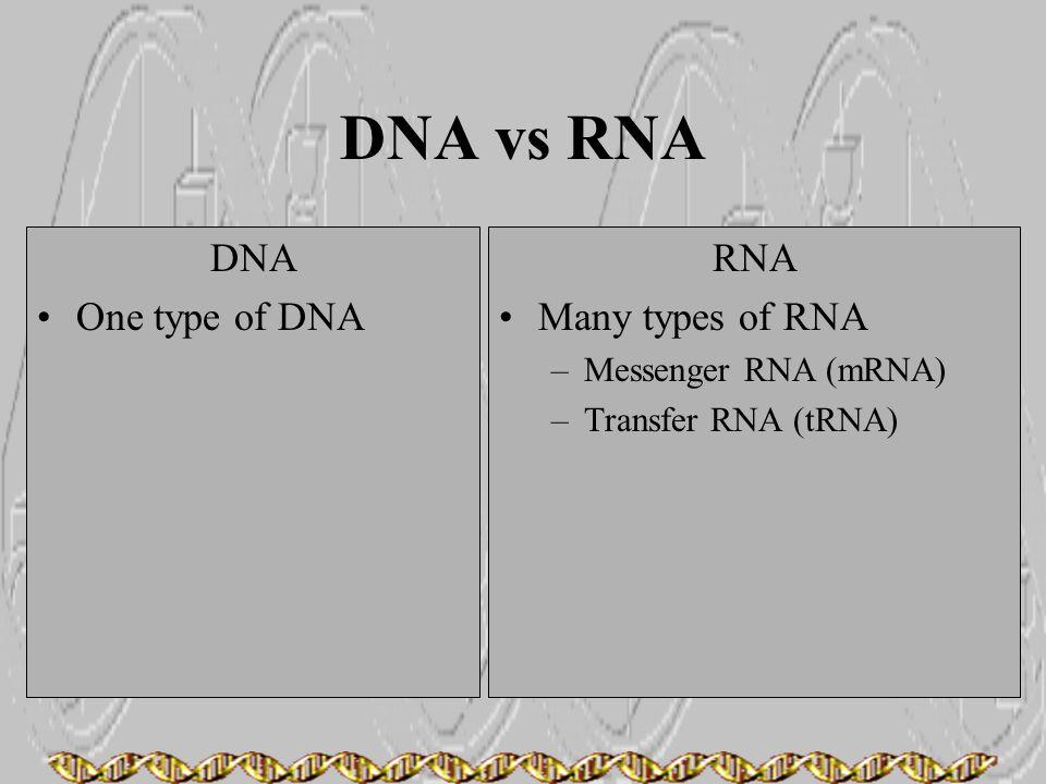 DNA vs RNA DNA One type of DNA RNA Many types of RNA –Messenger RNA (mRNA) –Transfer RNA (tRNA)