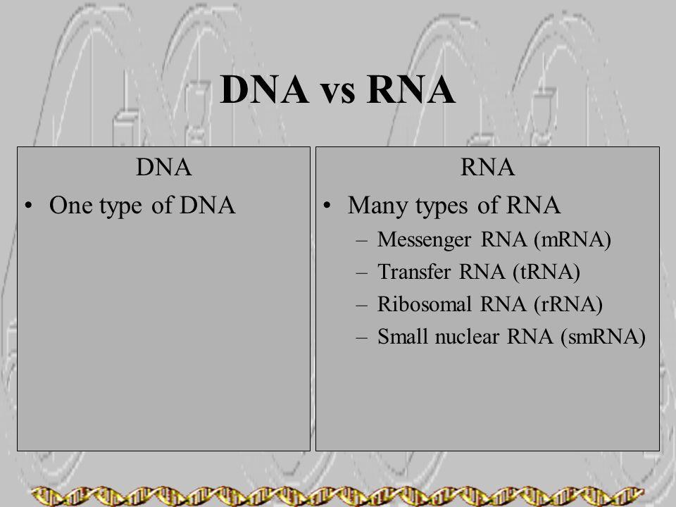 DNA vs RNA DNA One type of DNA RNA Many types of RNA –Messenger RNA (mRNA) –Transfer RNA (tRNA) –Ribosomal RNA (rRNA) –Small nuclear RNA (smRNA)